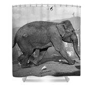 Minnie The Elephant, 1920s Shower Curtain