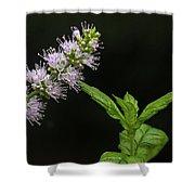 Mint Flower Shower Curtain
