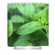 Mint Mood Shower Curtain