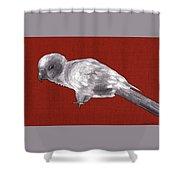 Mischievous Bird Shower Curtain