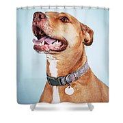 Mishka 2 Shower Curtain
