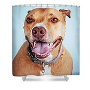 Mishka 5 Shower Curtain