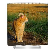 Miss Morning Shower Curtain