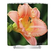 Miss Tinkerbell Daylily Shower Curtain