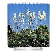 Mission Yuccas Shower Curtain