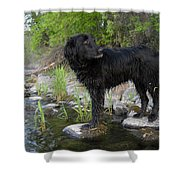 Mississippi River Posing Dog Shower Curtain
