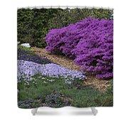 Missouri Botanical Garden Purple Azaleas Dsc01692 Shower Curtain