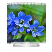 Missouri Wildflowers 5  - Polemonium Reptans -  Digital Paint 1 Shower Curtain