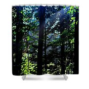 Mist, Leaves And Sunlight Shower Curtain