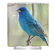 Mister Indigo Shower Curtain