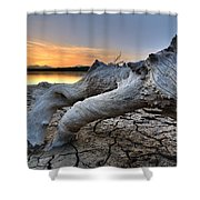 Mistery Old Tree Shower Curtain