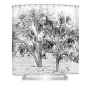 Mistletoe Tree In Black And  White Shower Curtain