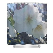 Misty Cherry Blossoms Shower Curtain
