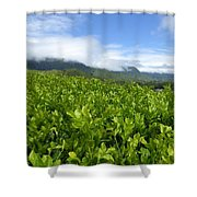 Misty Clouds Shower Curtain