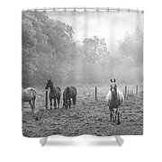 Misty Morning Horses Shower Curtain