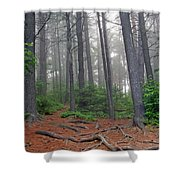 Misty Morning In An Algonquin Forest Shower Curtain
