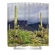 Misty Morning Peralta Shower Curtain