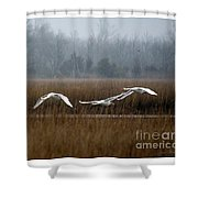 Misty Mute Swans Soaring South Jersey Wetlands Shower Curtain