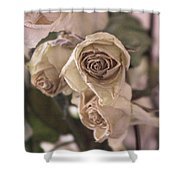Misty Rose Tinted Dried Roses Shower Curtain