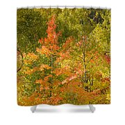 Mixed Autumn Shower Curtain