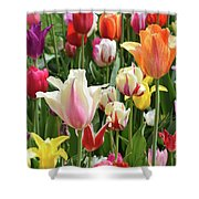 Mixed Tulips Shower Curtain