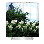 Mock Orange Blossoms Shower Curtain