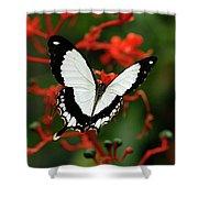 Mocker Swallowtail Shower Curtain