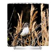 Mocking Bird 2 Shower Curtain