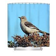 Mockingbird . 7682 Shower Curtain