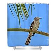 Mockingbird In A Palm Tree Shower Curtain