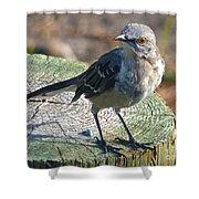 Mockingbird Shower Curtain