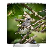 Mockingbird Youngster Shower Curtain