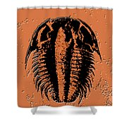 Modocia Typicalis Fossil Trilobite Shower Curtain