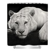 Mohan The White Tiger Shower Curtain