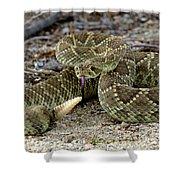 Mohave Green Rattlesnake Striking Position 3 Shower Curtain