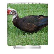 Mohawk Duck Shower Curtain