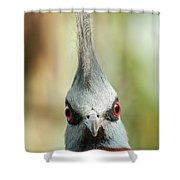 Mohican Bird Shower Curtain