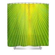 Molokai Palm Fan Shower Curtain