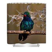 Molting Hummingbird Shower Curtain
