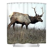 Molting Tomales Bay Elk Shower Curtain