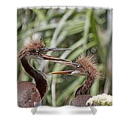 Mom Always Liked You Best Shower Curtain
