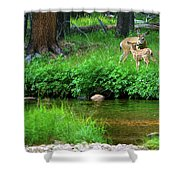 Mom And Baby Deer Shower Curtain