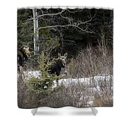Mom And Calf  In The Forest Shower Curtain