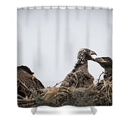 Mom And Little Eaglets Shower Curtain