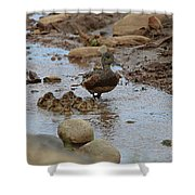 Mom Mallard And Ducklings Shower Curtain