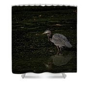 Moment Of The Heron Shower Curtain
