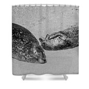 Momma And Baby  Black And White Shower Curtain