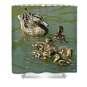 Momma Duck With Babies Shower Curtain