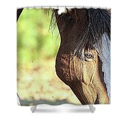 Momma Horse  Shower Curtain