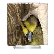 Mommy's Warmth Shower Curtain